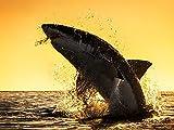 Shark Week: Die ultimativen Hai-lights