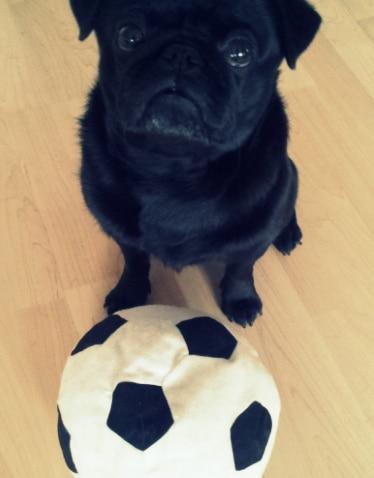 Mops mit Fußball